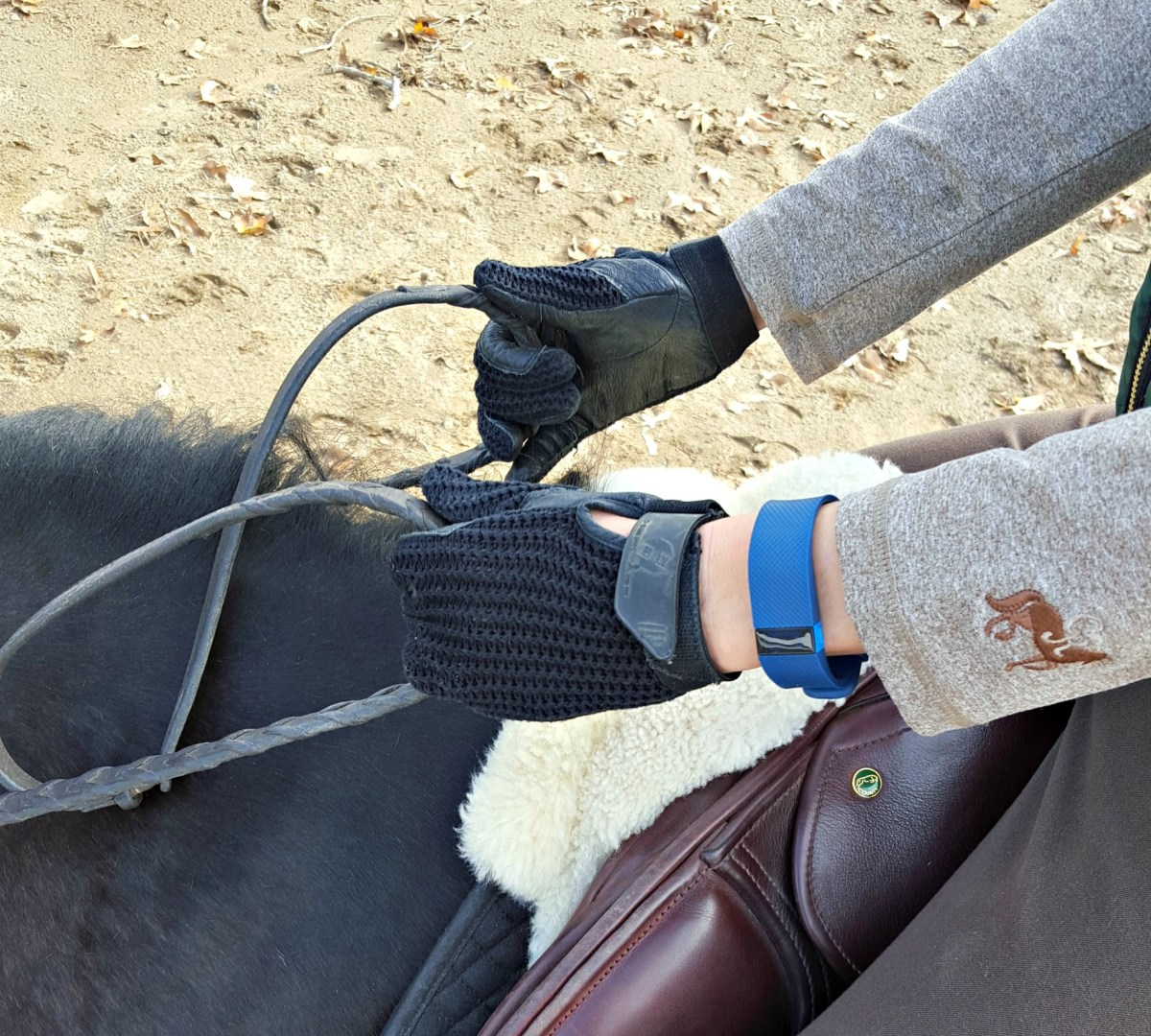 Fitbit for Horseback Riding: Fun Facts & Features